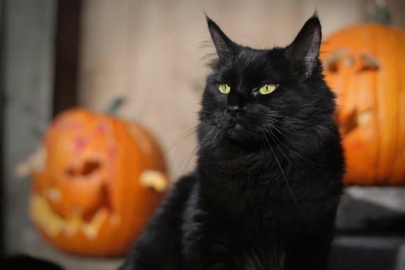Image 02 Halloween Black Cat